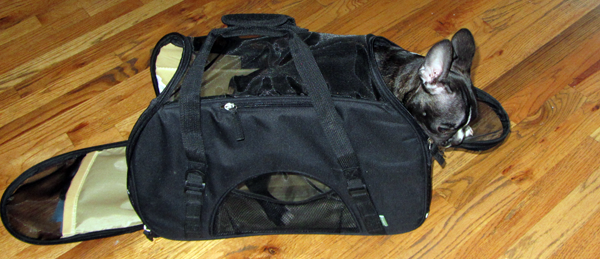 Marv in Travel Bag (Matt Ring of Fly.com's Puppy)
