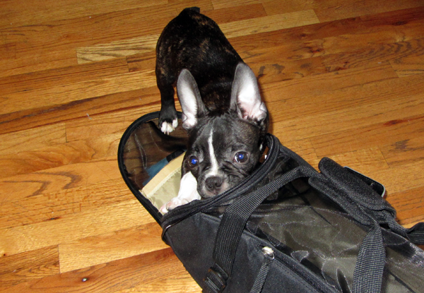Marv Entering Travel Bag
