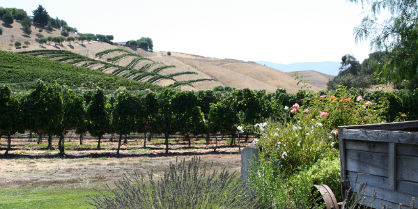 Santa Ynez Valley Vineyards