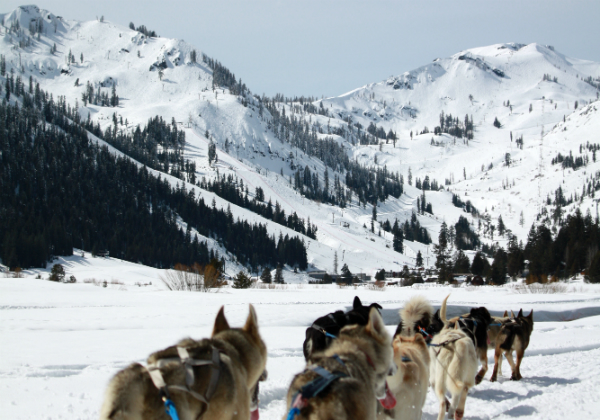 Dog Sledding in Squaw Valley