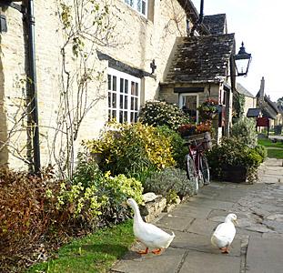Old Swan (Godfrey Hall)