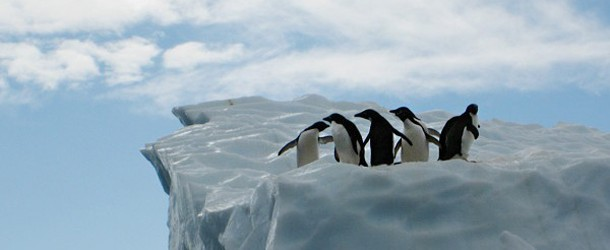 fly_antarctica_penguins_iceberg-610x254