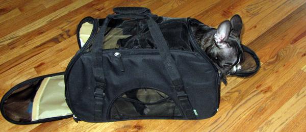 Marv in Travel Bag (Matt Ring of Fly.com's Puppy)