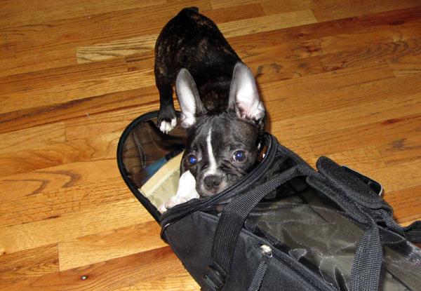 Marv Entering Travel Bag