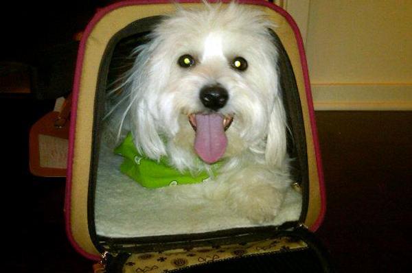 Noqui in Travel Bag