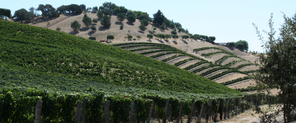 Santa Ynez Valley Vineyards 2