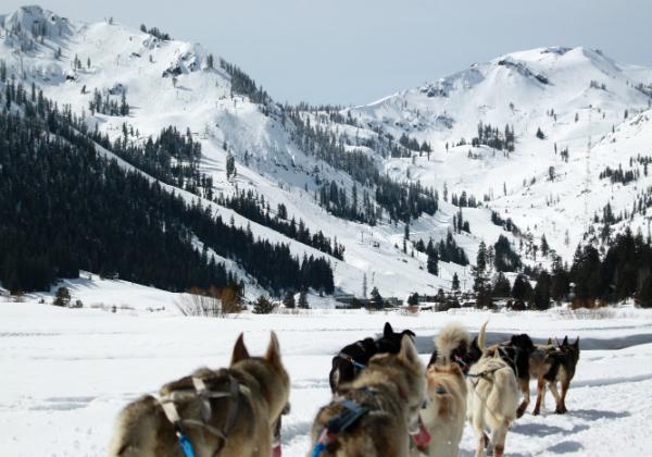 Dog Sledding in Squaw Valley