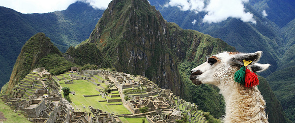 Llama at Machu Picchu, Peru Featured (Shutterstock.com)
