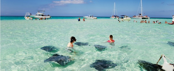 Stingrays at Sandbar, Grand Cayman Featured (Shutterstock.com)