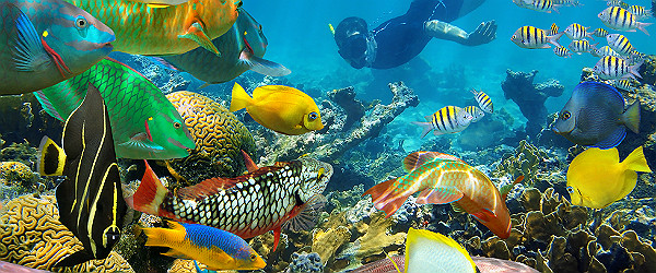 Swimming Among Coral Reef and Tropical Fishes Featured (Shutterstock.com)