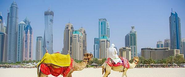 Camel on Beach in Dubai Featured (Shutterstock.com)