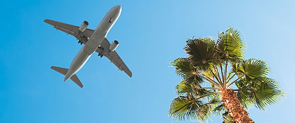 Orlando, Plane Taking Off Over a Palm Tree Featured (Shutterstock.com)