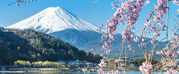 Mt Fuji and Cherry Blossom at Lake Kawaguchiko Featured (Shutterstock.com)